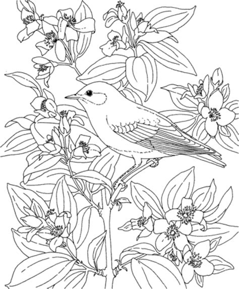printable coloring pages birds and flowers mountain bluebird and lewis s mock orange idaho bird and