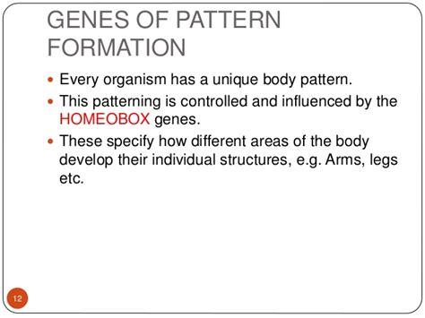 pattern formation limb pattern formation