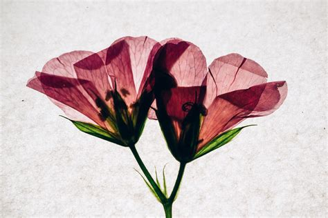 pressed flowers mel torres photography