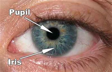 colored part of the iris facts about eye color of new mexico family