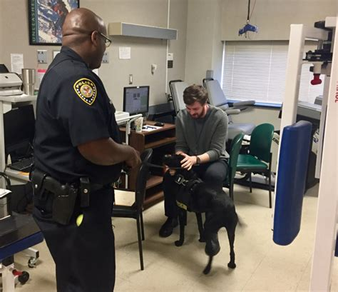 comfort officer dogs on duty mcguire police k9 bella also offers comfort