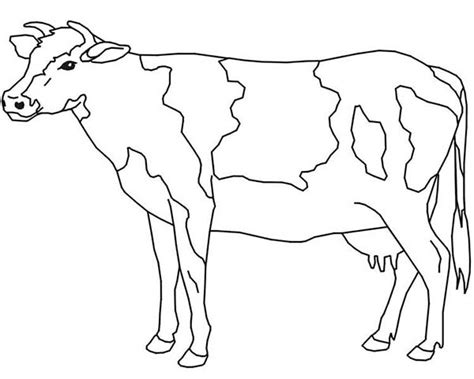 dairy cow coloring pages coloring pages