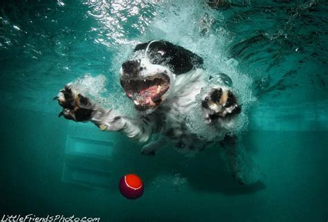 puppies underwater oh my seth casteel s surreal photos of dogs underwater democratic underground
