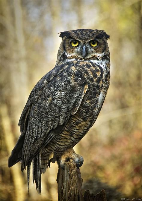 horned owl tattoo 477 best great horned owl images on great