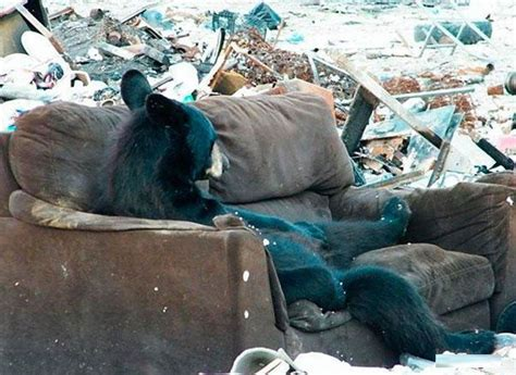 horse sitting on couch bears in russian streets fact or fiction lazer horse