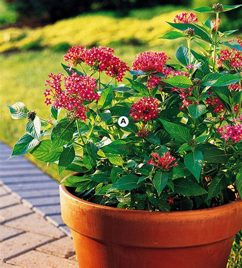 gardening for butterflies top butterfly container garden ideas