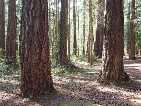 photos of tree trunks shorewood park tree trunks may