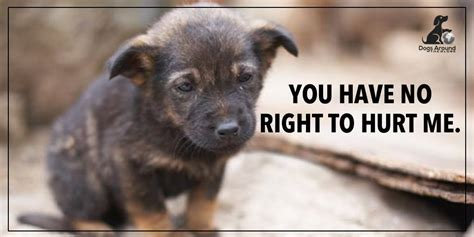 hurt dogs dogsaroundtheglobe on quot you no right to hurt dogs retweet if you agree