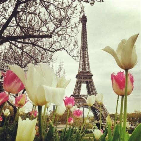 paris tulips paris the rest of france pinterest
