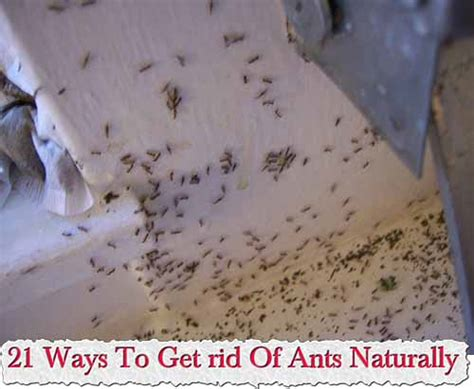 Safe Way To Get Rid Of Ants In Kitchen by Never Failed Me Yet Ant Bait