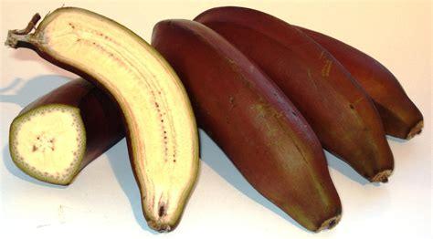 Tas Mango Second bananas pics