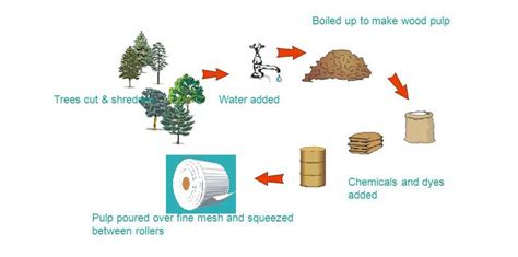 pulp paper process how to make paper from wood digester roll press disc filter