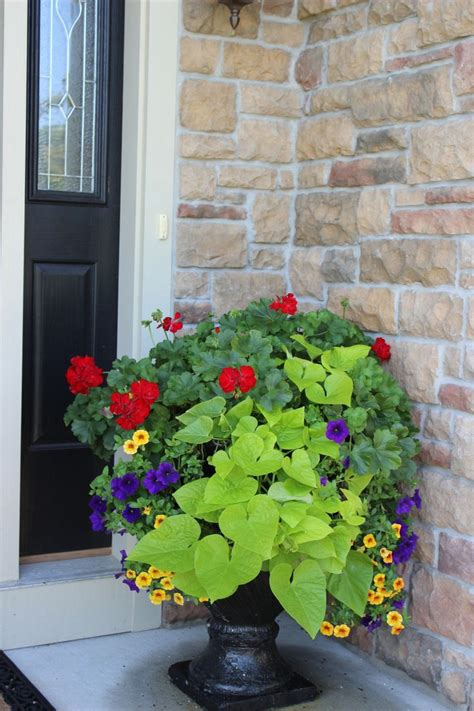 Container Plant Ideas Front Door by 17 Best Images About Front Door Plants On