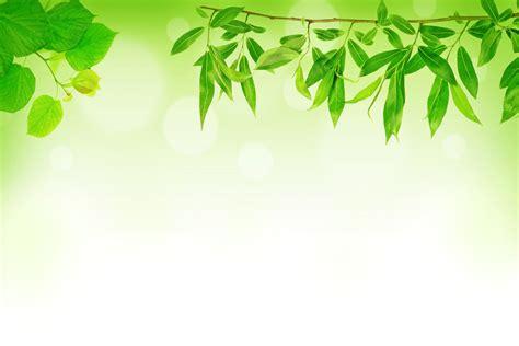 download wallpaper daun leaves background 8433 1920 x 1280 wallpaperlayer com