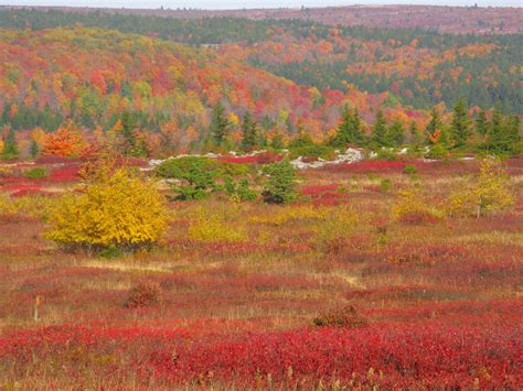of virginia colors file autumn colors dolly sods west virginia