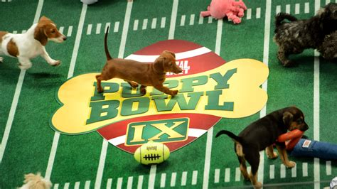 who won the puppy bowl puppy bowl cafe wins major points supports local shelters win sf