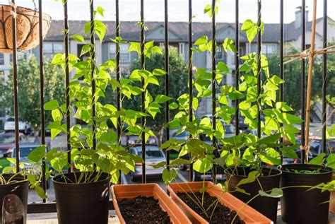 vegetable garden for apartment balcony image balcony and