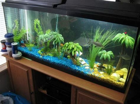 aquarium design photos blue fish tank dector ideas pictures of fish tank