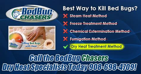 what is the best way to kill bed bugs the best way to kill bed bugs 28 images best way to