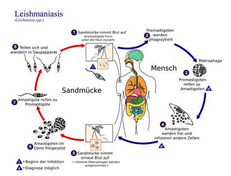 test leishmania leishmania