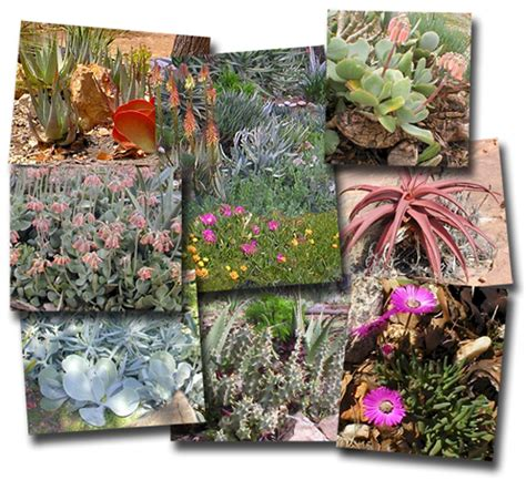 rock garden south rock garden ideas south africa pdf