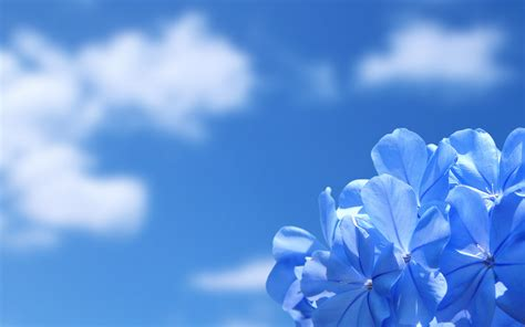 rare fragrance flowers hq pc wallpapers fashion gallery