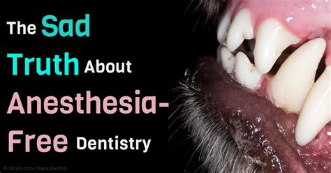 anesthesia free teeth cleaning diy dental care diy projects