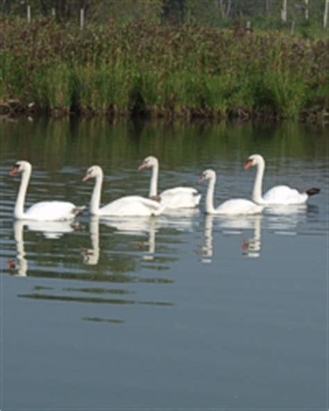 round lake laingsburg mi boat rental round lake map emmet county michigan fishing michigan