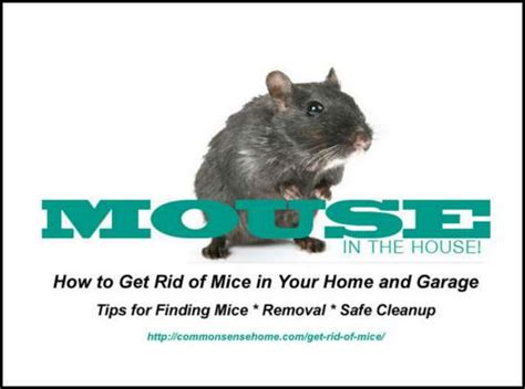 best way to get rid of mice in a garage 2017 2018 best
