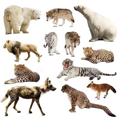 imagenes animales mamiferos los animales mam 205 feros herbivoros animales mamiferos