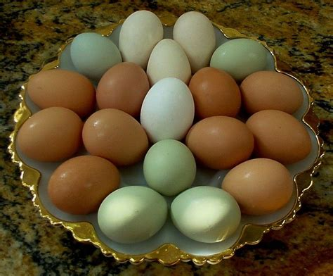 can you color brown eggs egg colors 1 backyard chickens
