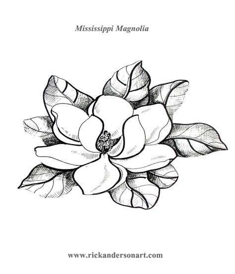 magnolia tree coloring pages rick anderson s art page of free things teachers can print
