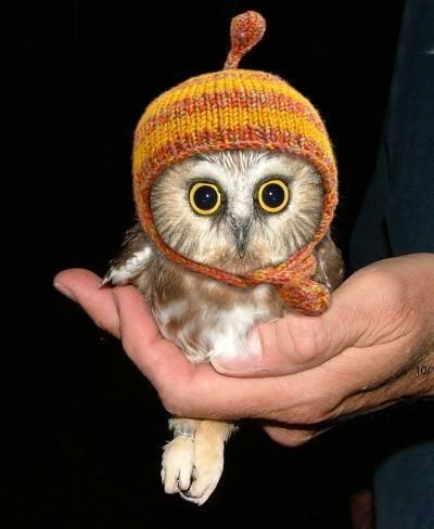 i want a pet owl so i can knit him a hat squeeee