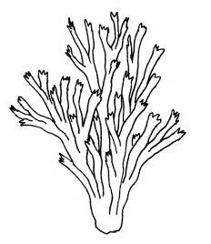 coral reef coloring page how to draw coral coral reef coloring pages for