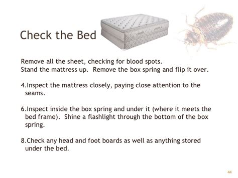 how to check for bed bugs bed bugs gpha