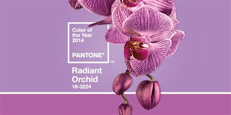 what color match purple collage 2 radiant orchid purple color create a radiant template with pantone s color of the year