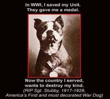 Sgt Stubby Decorated War Pin By Babbitt On A Bulls