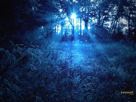 wallpaper blue forest youwall blue forest wallpaper wallpaper wallpapers free