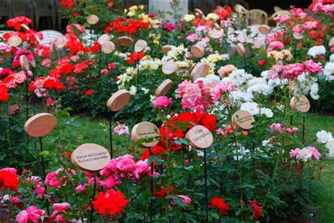 imagenes de jardines de rosas de colores file jardin de rosas jpg wikimedia commons