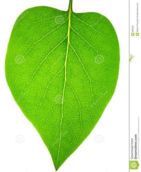 imagenes de hojas otoñales hoja imagen de archivo imagen de cubo blanco hojas