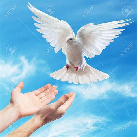 imagenes de palomas blancas grandes 11317195 las manos liberadas en el cielo azul con el sol
