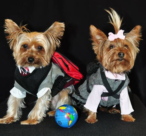best shoo for yorkie puppies best shoo for yorkies 90 best images about yorkies on