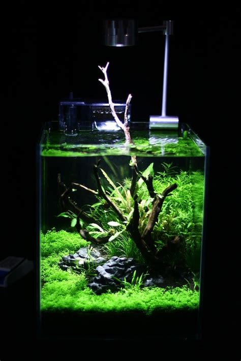 how to set up an aquascape 17 best images about aquariums on pinterest plants