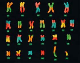 gummy worm chromosomes serious eats