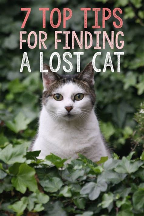 7 Tips On Finding A by 7 Top Tips For Finding A Lost Cat Cat And Animal