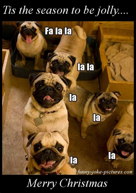 singing merry christmas pugs pugs pugs cute animals