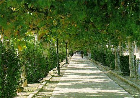 imagenes jardines y parques castellon parques jardines y avenidas