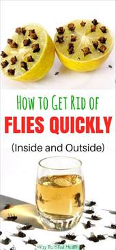 how to get rid of flies outside the house how to get rid of flies quickly inside and outside healthylife