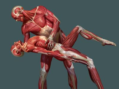 imagenes artisticas cuerpo humano v 237 ctor ezquerro p 225 ez anatom 237 a art 237 stica
