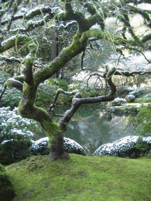 what does the sycamore tree symbolize ehow free admission fall trees and japanese gardens on pinterest